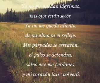 Poemas para pedir perdón