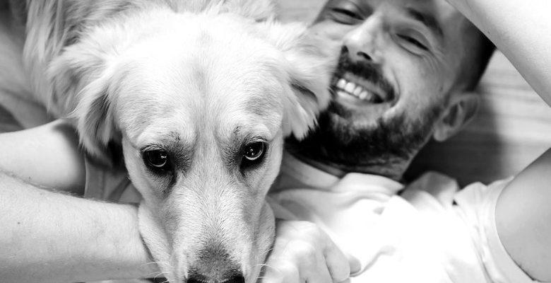 Las mejores frases para perros